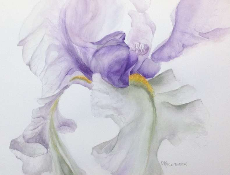 The Veiled Iris
